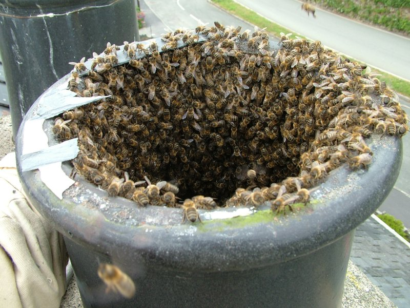 Swarm In Ex Council House Chimney
