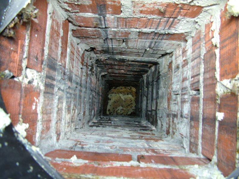 Chimney Colony Removal Penrhos